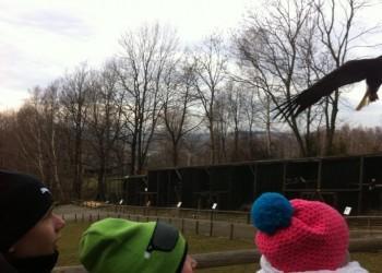 oboz-rekreacyjno-narciarski-ustron-2014133