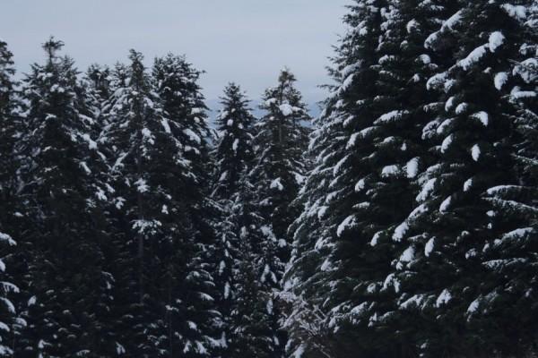Zimowisko-Kosarzyska-2018-9